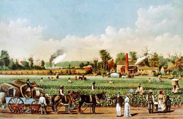 Cotton Plantation - Slave Plantations