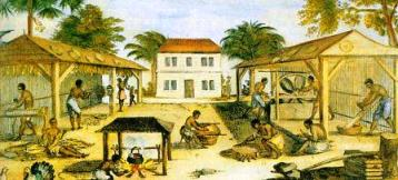 Slaves working in a tobacco plantation