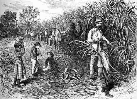 why did sugar and slaves become History other essays: why did sugar and slaves become linked in 17th century caribbean.