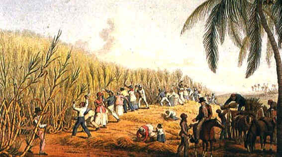 Die Kolonie Sugar-plantation-1823